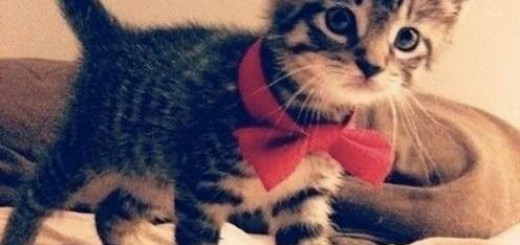 Kitten with a Bow Tie