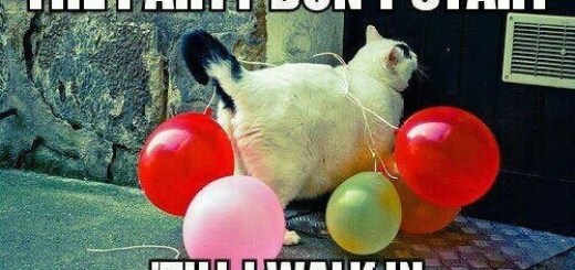 cat with balloons