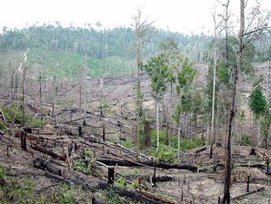 kerusakan-hutan1