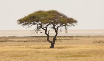 Road Adventure through Namibia