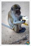 Dankbarer Affe beim Monkeycave