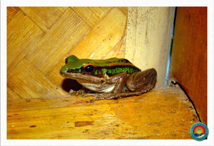 Frosch in unserem Bungalow