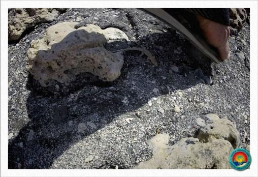 Clean-Up Day - Fransenfinger Echse sucht Versteck unter den Flip-Flops