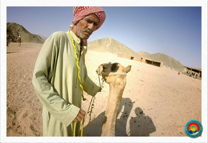 Beduinen Kamelführer