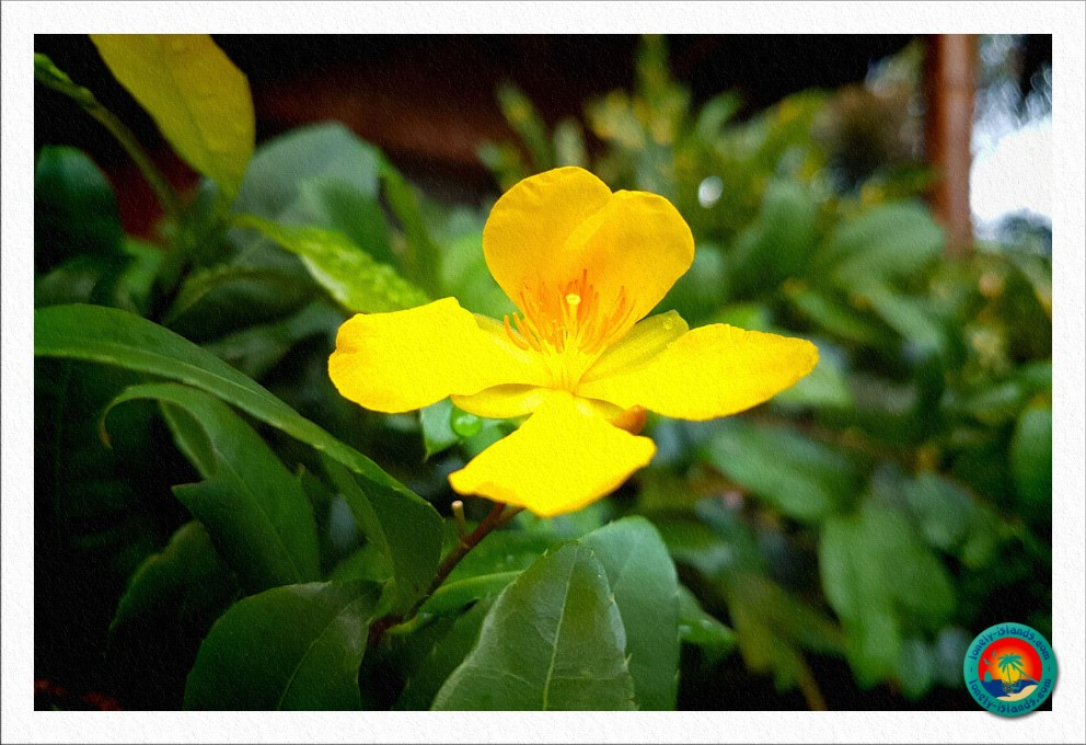 Blume im der Hotelanlage