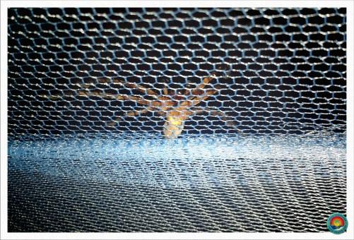 Begrüßung einer großen Spinne am Morgen. Danke an dem Moskitonetz :D