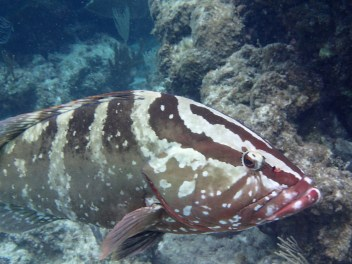 Grouper profile