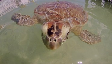Come and meet the turtles of Coco Bay
