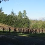 The Armida Winery estate petite sirah vineyard