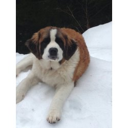 Small Crop Of Seattle Craigslist Pets