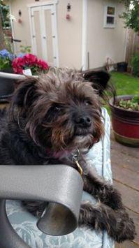 Missing Dog  Walla Walla, Wa | LOST & FOUND PETS WA STATE