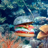 These Pictures May Change the Way We Look at Burgers Forever
