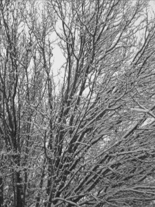 Icy Trees 2