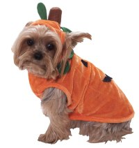 Canine Costume Contest | Town of Louisville