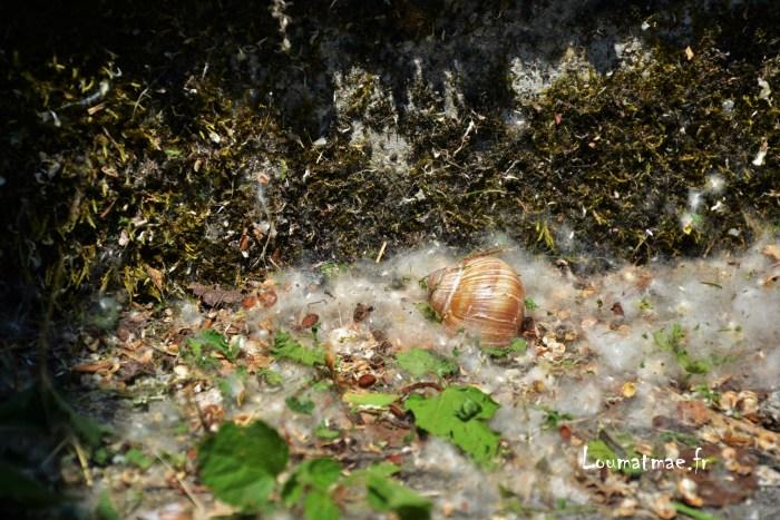 coquille d'escargot