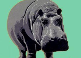 Zoo - Top Image