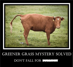 Greener Grass Mystery Solved