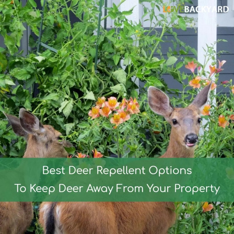Large Of Homemade Deer Repellent