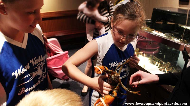 Holding the Lobsters at Red Lobster #lobsterworthy