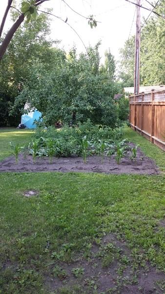 Canadian garden