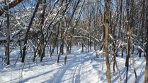 Cross country skiing (6)