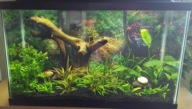fish tank (1)