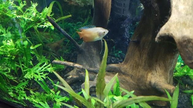 fish tank (2)
