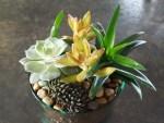 succulent garden (5)