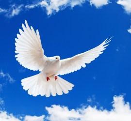 v-m Holy Spirit