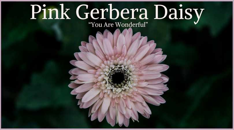Gerbera Flower Bengali Meaning 10+ Best Funeral Flowers | Ultimate Guide | Love Lives On