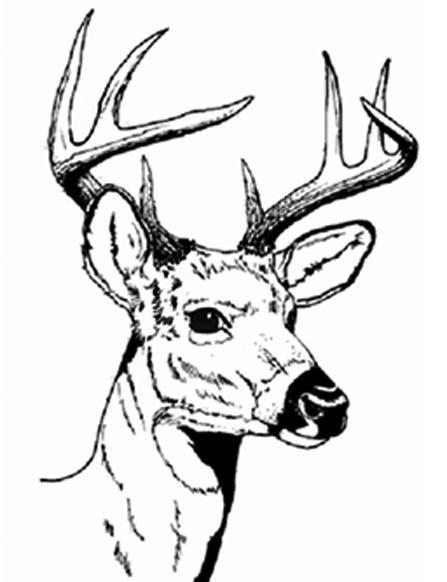 FreeArtWork_DeerHeadLarge