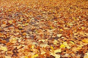 autumn-leaves-fall-16701073royaltyfree