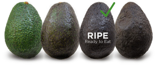 How To Pick Buy Fresh Avocados Love One Todayr
