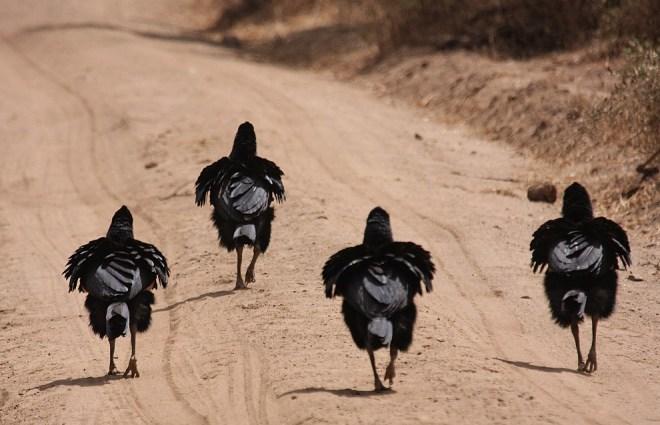 Четыре черные птицы