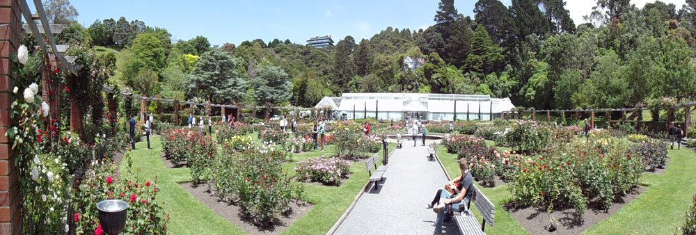 Wellington botanic rose gardens
