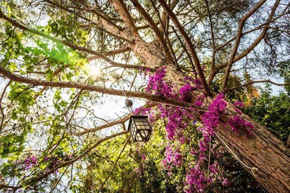 чиралы - сад