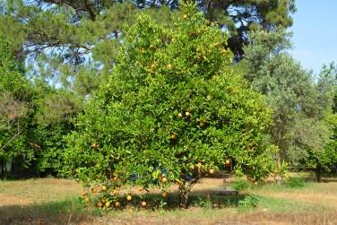 Чиралы - фруктовый сад