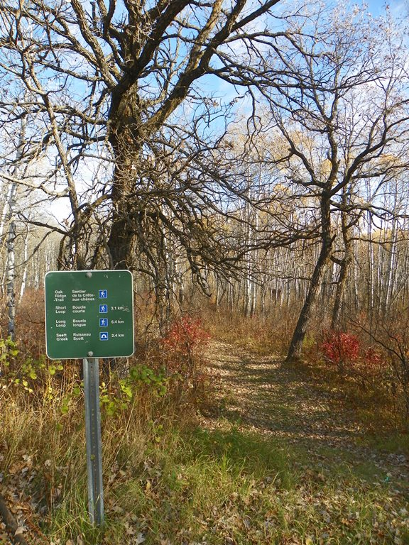 Oak Ridge и Scott Creek