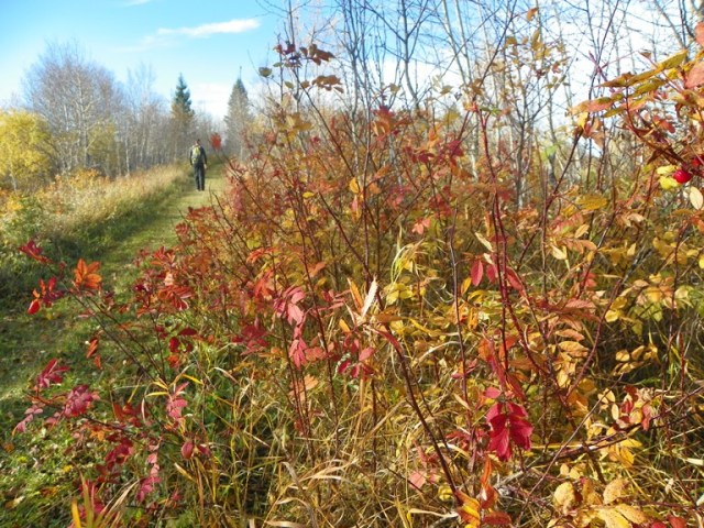 North Escarpment Trail