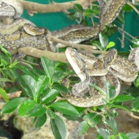 Snakes, Caves, and Habushu: Oh My!