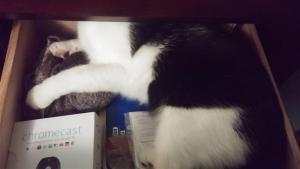 Cat in Dresser