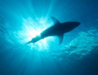 Shark Safety