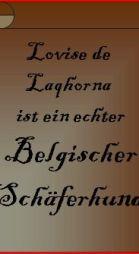 belgischer-schaferhund2.JPG