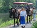 Mule-skinners