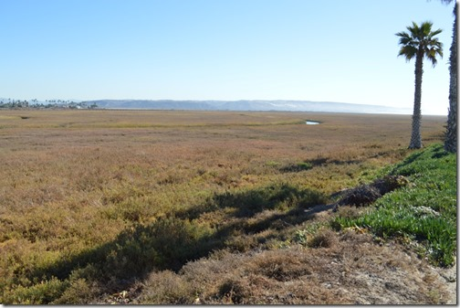 Tijuana Estuary