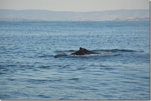Whale-4 dorsal fin