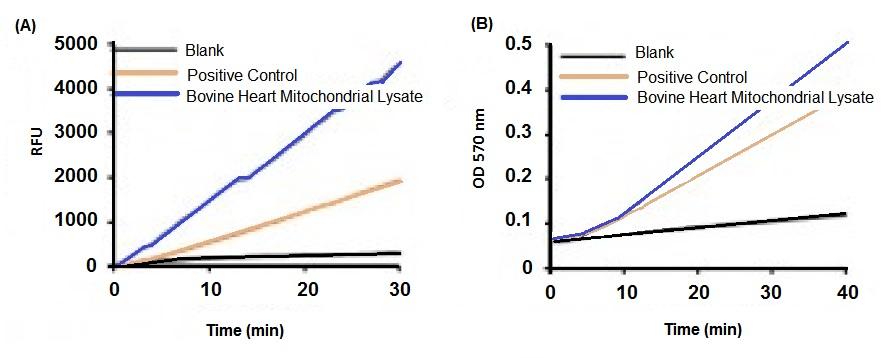 Adenylate Kinase (AK) Activity Kit (Color/Fluor) - LS-K37