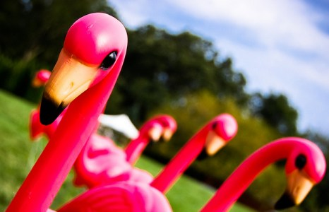 Johnny Appleseed, Pink Flamingos and Lucky Scarf's Hometown