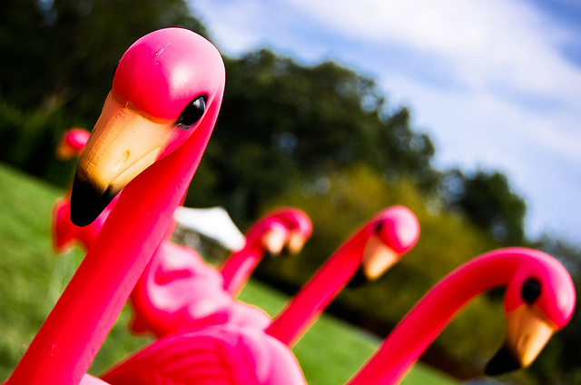 Pink Plastic Flamingos by Ryan Hyde/Flickr