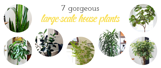 Dream House Updates | Indoor Climbing Walls & The Hunt for House Plants